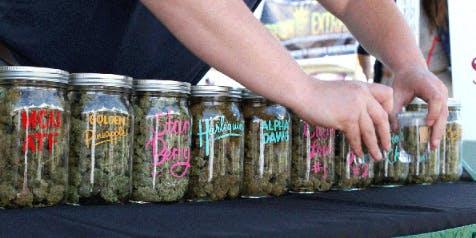 New England Marijuana Dispensary Training - August 24th