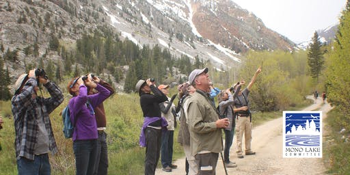 Lundy Canyon Bird Walk