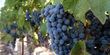 2019 Harvest Vineyard Edu-excursion: Thursday, September 12th tickets