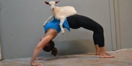 Pav Goat Yoga