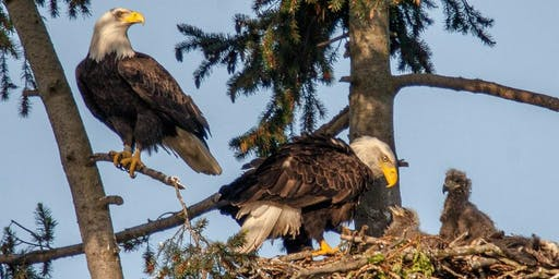 Eyeing the Eaglets