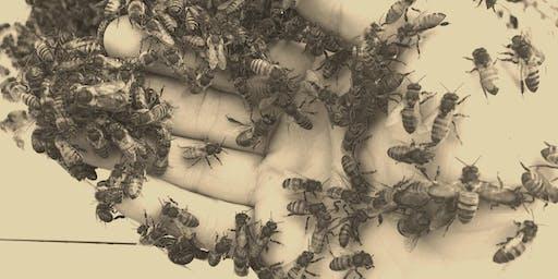 Brueggen's Bees