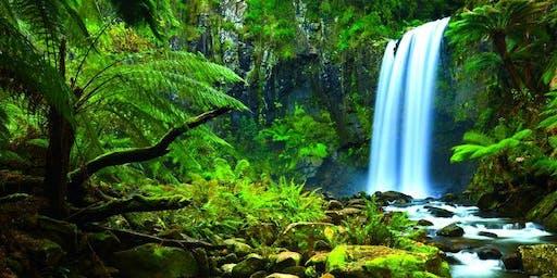 Little Dinner Series | Journey Through the Rainforest | 6.18.19