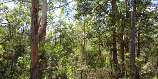 Bush Explorers: Habitats of Campbelltown - Nature Walk - Smiths Creek