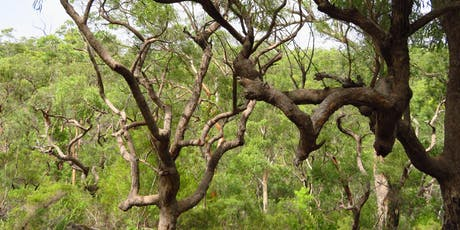 Bush Explorers: Wild Wednesdays - Nature Walk - The Woolwash tickets