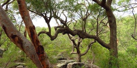 Bush Explorers: Wild Wednesday nature walk - Scattergood Reserve tickets