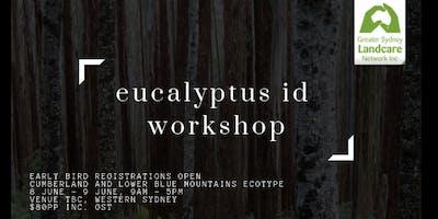 Eucalyptus ID with Peter Mobbs