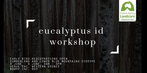 Eucalyptus ID with Peter Mobbs