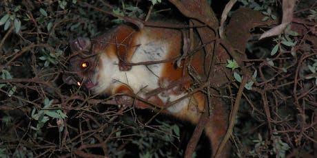 Bush Explorers: Spotlight Night - Peter Meadows Reserve tickets