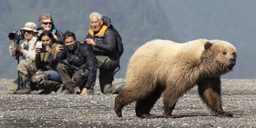 June 10-13, 2020 : 3-day Bear Photography Extravaganza