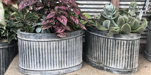 Drought Tolerant Container Gardening