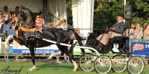 Nationaal Tuigpaardenconcours Norg