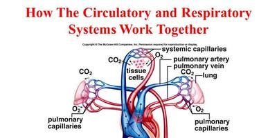 Respiratory and Cardiovascular systems - October - Thanet