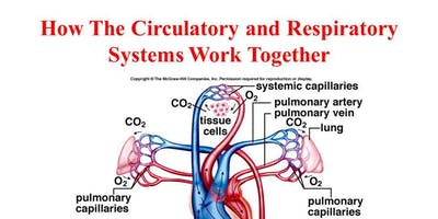 Respiratory and Cardiovascular systems - October - Chertsey