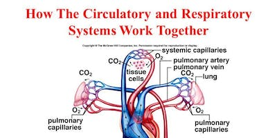 Respiratory and Cardiovascular systems - October - Tangmere/Bognor