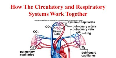 Respiratory and Cardiovascular systems - October- Steyning