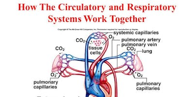 Respiratory and Cardiovascular systems - October - Henfield