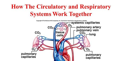 Respiratory and Cardiovascular systems - October - Paddock Wood