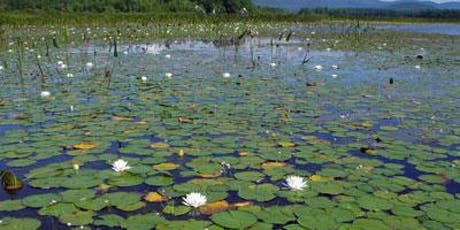 Aquatic plants: Friends and Foes - Including Moss Animals tickets