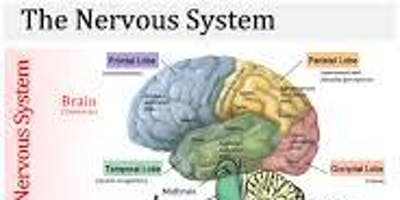 Neurological Systems -November - Steyning