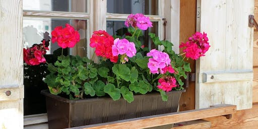 DIY Planter Box with Bunnings
