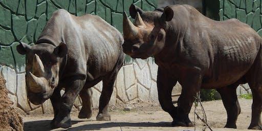 Trivia For Rhinos 2019