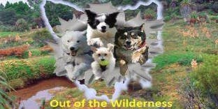 Tassie Flying Paws Dog Club Inc - Out of the Wilderness Flyball Comp
