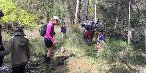 Exploring Bugle Tree Gully