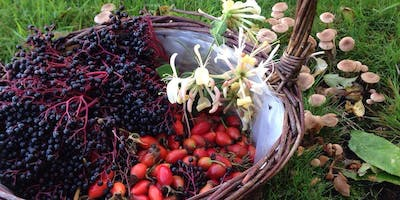 Summer Foraging Course