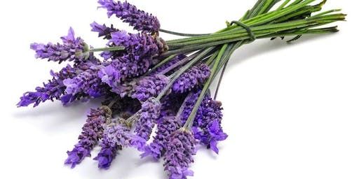 Introduction to Essential Oils- Nature's Medicine Cabinet West Hampstead