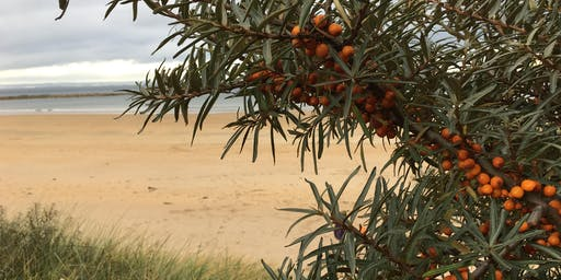 Seaweed and Seabuckthorn