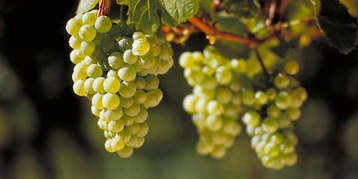 Liquid Translation wine varietal tasting series  - Riesling