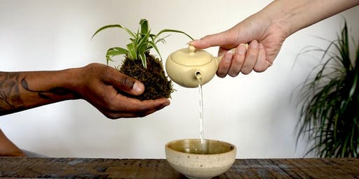 Kokedama and the Art of Japanese Tea Tasting