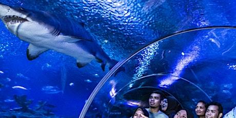 Aquaria KLCC tickets