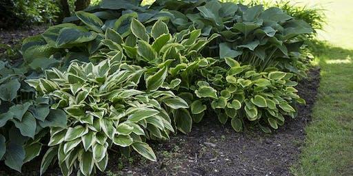 Shade Perennials Talk