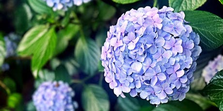 Hydrangea Care Class tickets