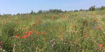 Summer Flowers and Wildlife Walk