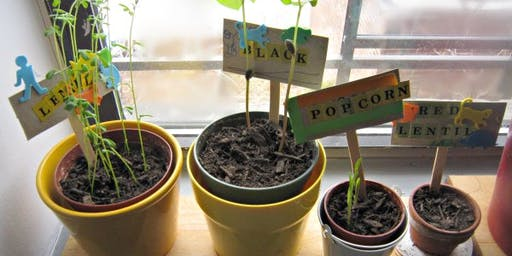 Seed to Plate Hydroponics Summer Camp