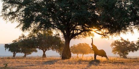 Wild Africa: Presentation by Shem Compion & Mark Overgaard @ PhotoCentral tickets