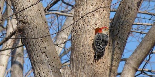 Fall Migration Birding
