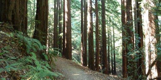 East Bay: Summer Saunter in the Redwoods