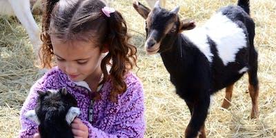 Hug & Feed Goat Kids at Lally Broch Farm