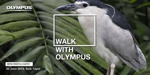 WALK WITH OLYMPUS - BIRD PHOTOGRAPHY (KL)