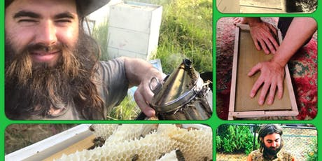 For The Love Of Bees - Beginner Beekeeping Course with Lachlan Cranitch tickets