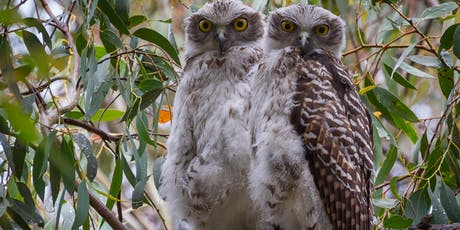 Downtown lecture- Australian raptors – a photographic journey tickets