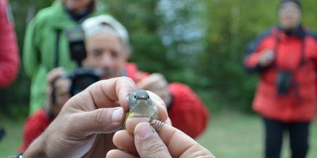 Festival des oiseaux migrateurs de la Côte-Nord billets