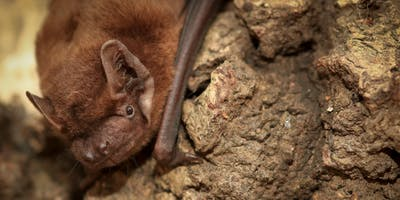Family Bat Night @ Ufton Fields