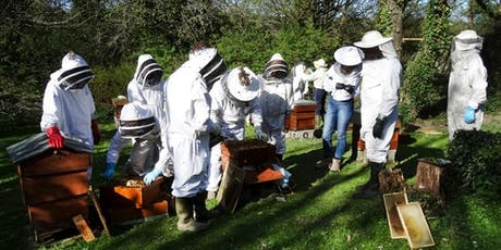 CCBKA Beekeepers Beginners Course 2019 tickets