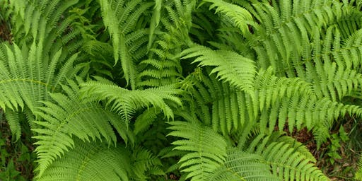 Introduction to Ferns