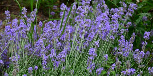 Flower Power Party: Lavender Night